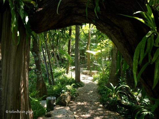 Caminos entre la jungla