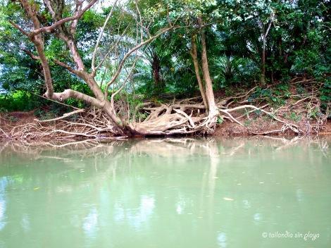 Árboles en Khao Sok