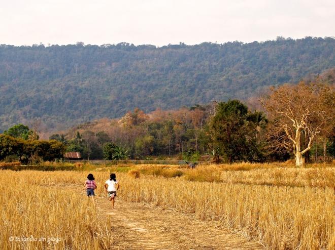 En los campos de Ban Phu