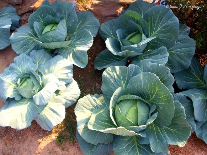 Verdura orgánica en Ban Phu