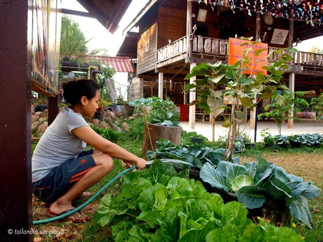 Regando las verduras