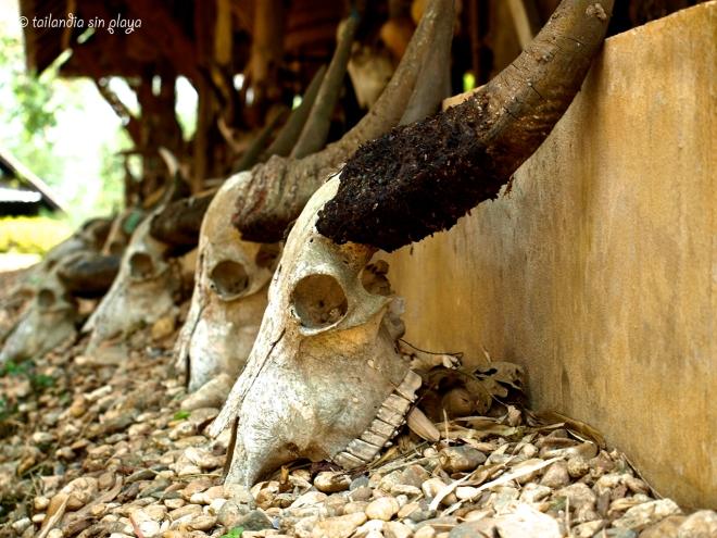 Búfalo en Casa negra Chiang Rai