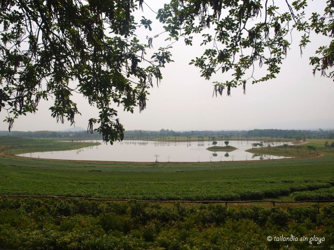Singha Park jardines y entorno Chiang rai